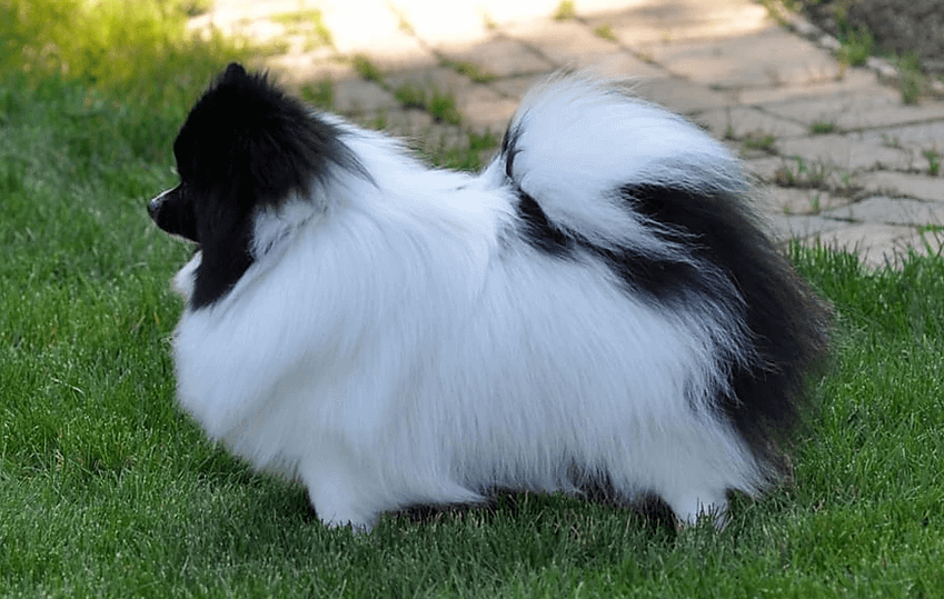 Dog Grooming Services - Danville, CA - Danville Paw Spa