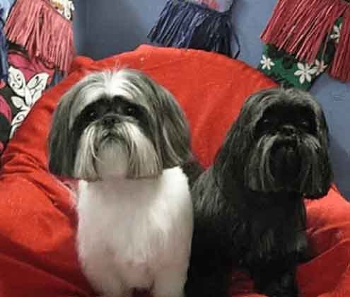 Two well-groomed doggies at Danville Paw Spa